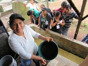 Proceso de fermentación de café en planta de beneficio húmedo
